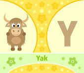 stock photo of yaks  - The English alphabet with Yak  - JPG
