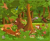 picture of wild-rabbit  - wild animals fighting in the forest - JPG