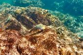 foto of coral reefs  - Coral reef and fish at Seychelles - JPG