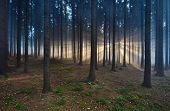 image of early morning  - November early morning misty forest with sun rays - JPG
