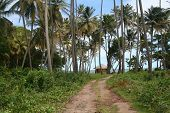 Road To Beach