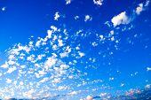 White Clouds ~ Blue Sky