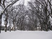 Snowy 8th Street