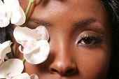 foto of african american hair styles  - Beautiful black woman - JPG