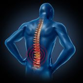human back pain spinal cord skeleton