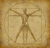 vitruvian human diagram grunge medical chart