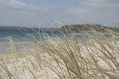 Sea_Grasses