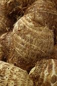 pic of taro corms  - background of freshly harvested taro root - JPG
