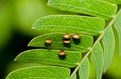 pic of animals sex reproduction  - bug egg in green nature or in garden - JPG