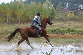 The Horseman On The Horse Skips On A Bog