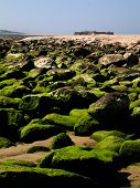 Green rocks in a beach