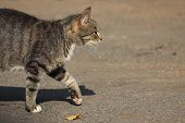 Stray Tabby Cat Walking Down The Road In Sunny Day. Street Cat In Search Of Food poster