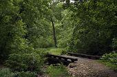 Forest Footbridge