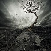 picture of sorrow  - Dramatic sky over old lonely tree - JPG