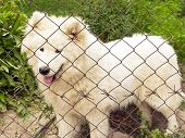 A Lost Dog Is Sitting In A Cage. Kennel For Dogs. Homeless Animal. Animal Protection. poster