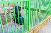 Asiatic Black Bears Next To Large Rock Structure In Cage At Local Zoo. poster