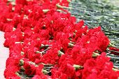 Many red flowers at memorial to tomb of Unknown Soldier in Alexander Garden at Victory Day