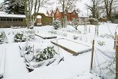 Large Vegetable Garden Covered In Snow In Winter, England Uk poster