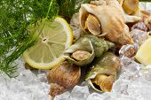 whelks with dill and lemon on ice