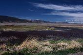 Alamosa Wetlands in Springtime