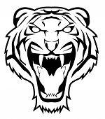image of wildcat  - tiger face  - JPG