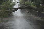 Brisbane, Australia - January 27 : Trees Fallen Across Road During  Tropical Cyclone Oswald On Janua