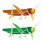 Vector image of an grasshopper