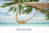 Palm Tree in Tropics with Hammock