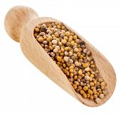 Mustard seeds close up in wooden scoop spoon