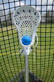 Lacrosse Stick In Net