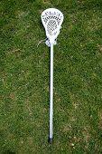 Lacrosse Stick In The Grass