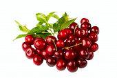 Sweet Cherry Fruits