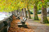 Benches on the Thames in Victoria Tower Gardens park in London