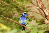 Blue-Green Rainforest Bird