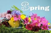 picture of petunia  - Beautiful Springtime bright and colorful floral display on green grass with petunia marigold and rose Spring flowers and polka dot cup against a cheerful blue background - JPG