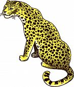 pic of panther  - Leopard Panther Wild Cat Vector Hand - JPG
