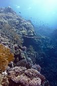 coral reef with hard and fire corals at the bottom of tropical sea
