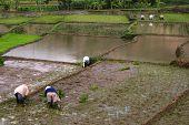 farmers work in the fields