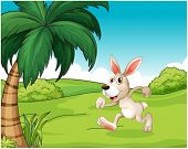 picture of hilltop  - Illustration of a bunny running at the hilltop on a white background - JPG