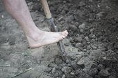 Digging Spring Soil With Schovel