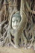 Buddha Head Entwined Tree Roots In Ayutthaya