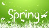 Vector Green Spring Background
