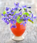 violets flowers (Viola odorata) on wood background