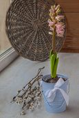 Pink Hyacinth In A Bucket On The Window And Willow Twigs