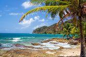 Palm Tree And Caribbean Sea