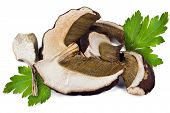 picture of porcini  - Dried slices of porcini mushrooms on a white background - JPG