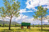 Green Wagon And Vineyard