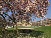 ZAGREB, CROATIA - MARCH 19, 2014: Art Pavilion in Zagreb, Croatia seen from underneath the magnolia tree in bloom and group of young people under the tree