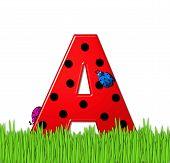 Alphabet Lady Bug Red A