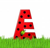 Alphabet Lady Bug Red E